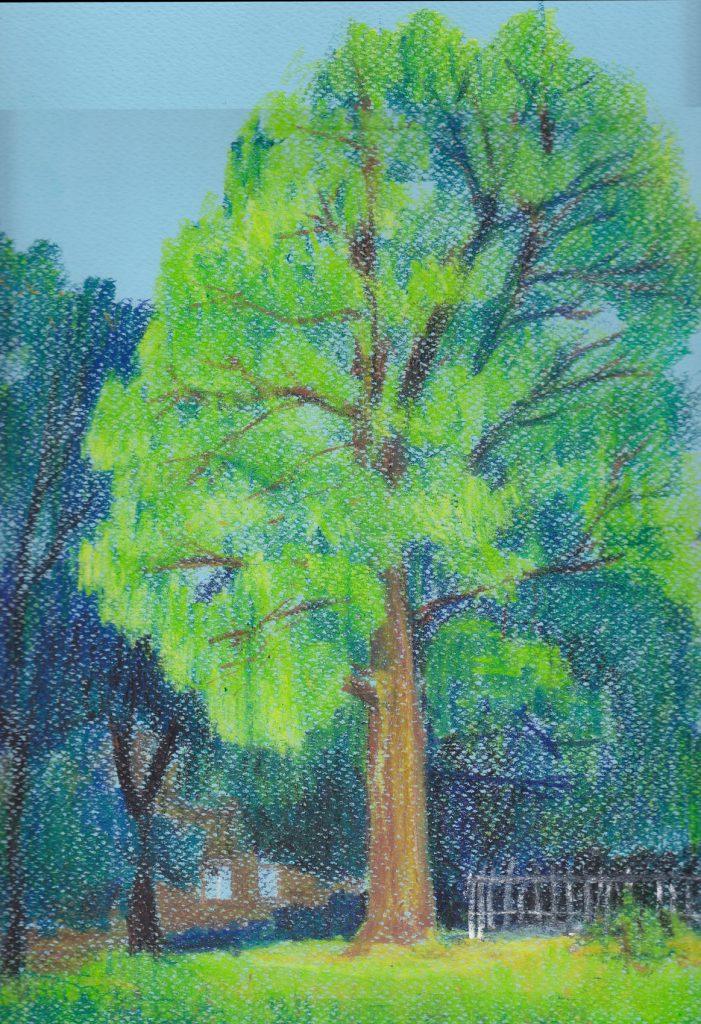 strom-v-parku-u-Zlateho-Lva